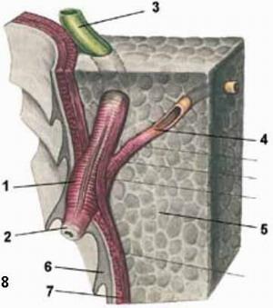 Дискинезия желчных путей - Сфинктер Одди.